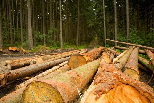 Stock Photo: 4141-62123 Logging In Commercial Conifer Plantation