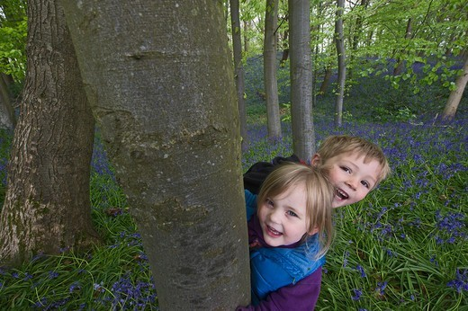 Young Children Playing In Bluebell Wood Norfolk May : Stock Photo