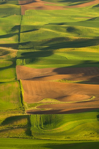 Stock Photo: 4141-6730 fields near steptoe, washington usa