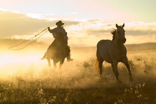 Stock Photo: 4141-6734 cowboy lassoing horse at sunset oregon usa