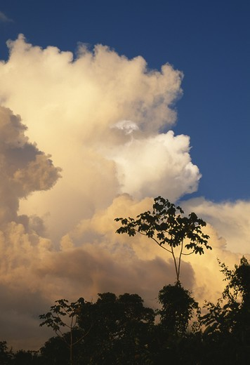 Stock Photo: 4141-7684 storm clouds over rainforest bolivar venezuela south america