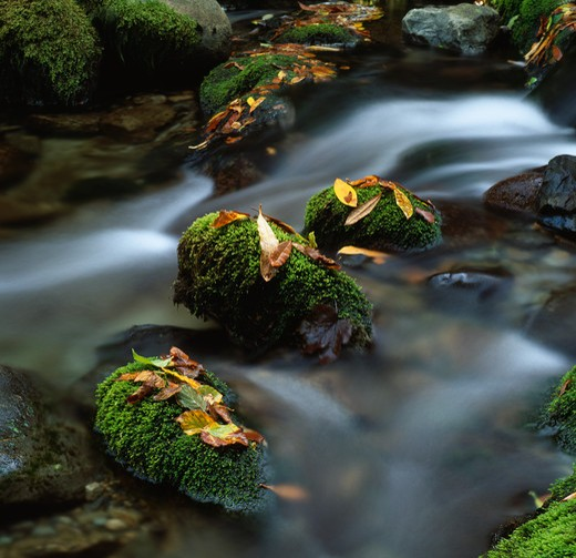 Stock Photo: 4141-9232 mossy stones with leaves in autumnal colours shimna river, tollymore forest park, newcastle, down, se ulster