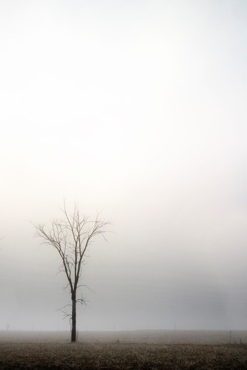 Stock Photo: 4148R-1445 A single tree in the fog.