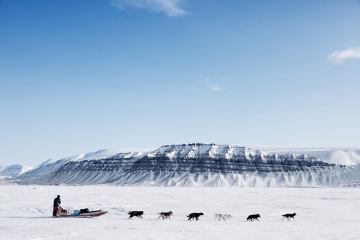 A dog sled running on a barren winter landscape : Stock Photo