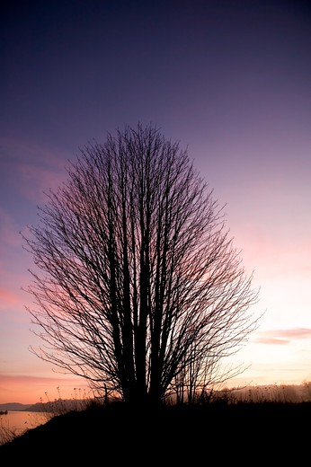 A single tree on a hill near the ocean at sunset. : Stock Photo