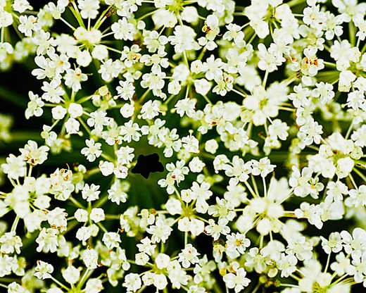 Stock Photo: 4152-172 Close-up of white flowers