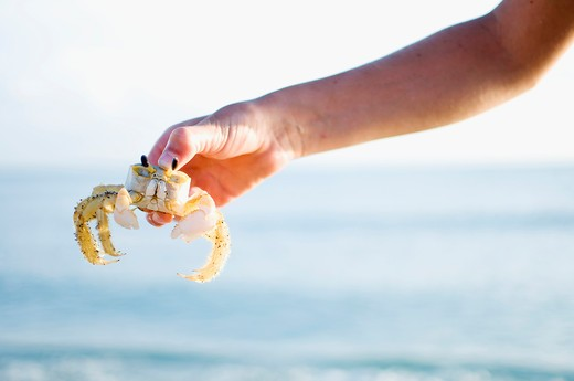 Stock Photo: 4152-221 Close-up of a person's hand holding a small crab