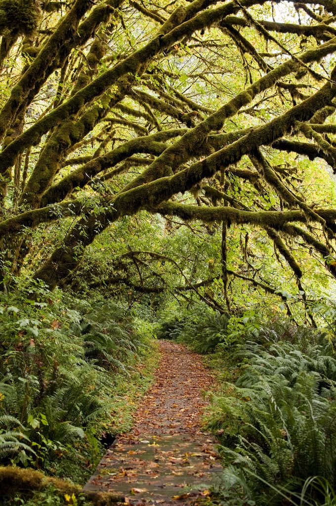 Stock Photo: 4152-310 USA, Oregon, Redwood Forest