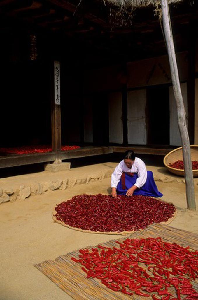 Stock Photo: 4163-10156 KOREA, NEAR SEOUL, KOREAN FOLK VILLAGE, FARM HOUSE, WOMAN DRYING PEPPERS