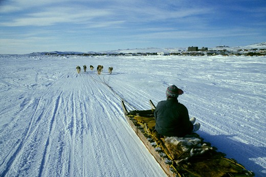 CANADA, NUNAVUT, BAFFIN ISLAND, IQALUIT, DOG TEAM RACES, TEAM APPROACHING FINISH LINE : Stock Photo