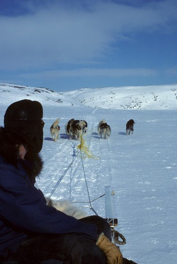 CANADA, NUNAVUT, BAFFIN ISLAND, NEAR IQALUIT, DOG TEAM PULLING KOMOTIK (SLED) : Stock Photo