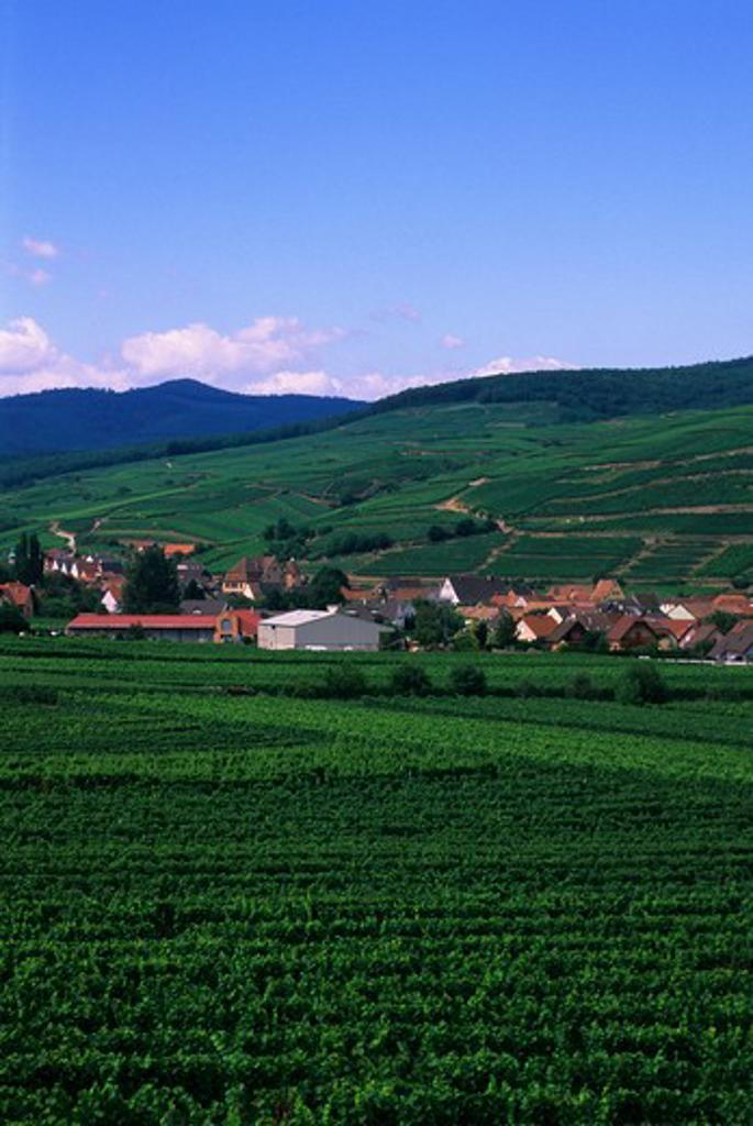 FRANCE, ALSACE REGION, WINE COUNTRY NEAR COLMAR, VIEW OF SOULTZMATT : Stock Photo