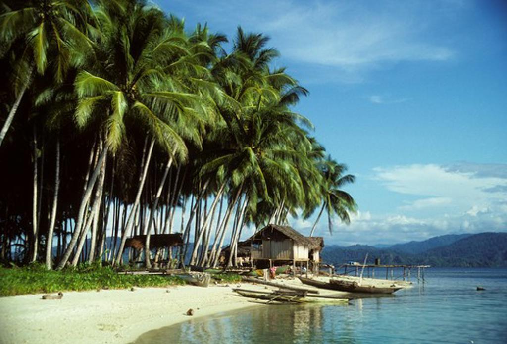 PAPUA NEW GUINEA, HOSKIN ISLAND, NEAR MOROBE, COASTAL VILLAGE WITH COCONUT PALMS & CANOES : Stock Photo