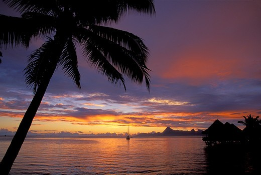 FRENCH POLYNESIA, SOCIETY ISLANDS, TAHITI, BEACHCOMBER HOTEL, SUNSET, SAILBOAT, MOREA IN BACKGROUND : Stock Photo