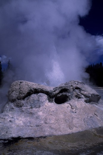 USA, WYOMING, YELLOWSTONE NATIONAL PARK, UPPER GEYSER BASIN, GROTTO GEYSER : Stock Photo