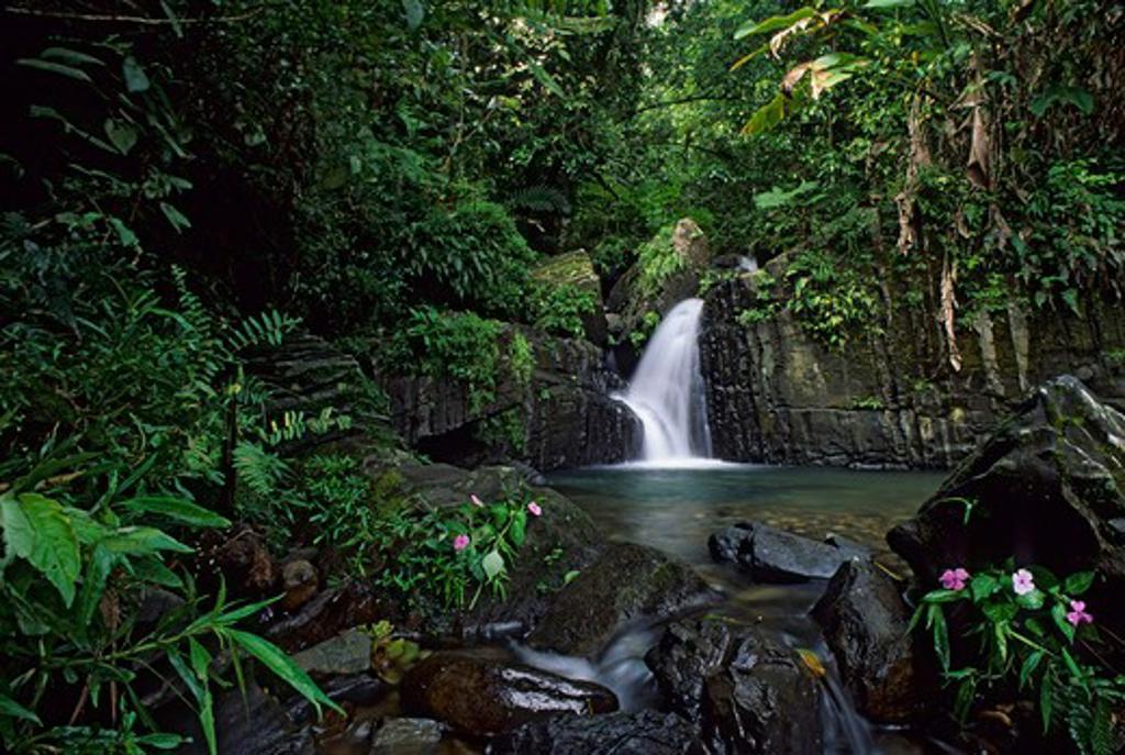 PUERTO RICO, EL YUNQUE RAIN FOREST, WATERFALL, IMPATIENS : Stock Photo