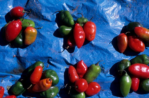 Stock Photo: 4163-18109 PERU, NEAR CUZCO, SACRED VALLEY, PISAQ, MARKET, CHILI PEPPERS, CLOSE-UP