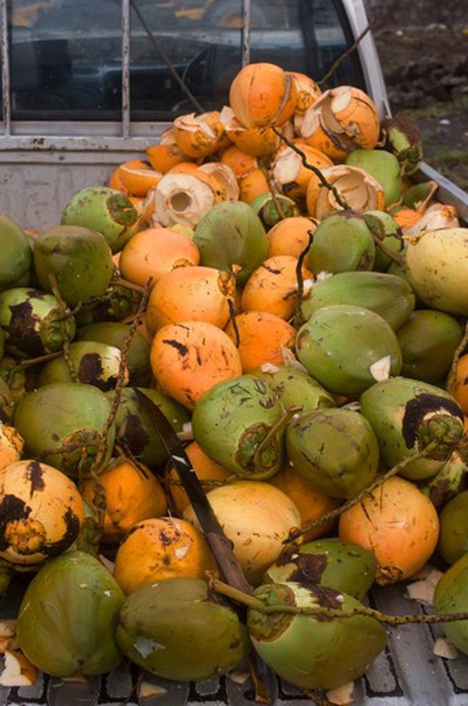 DOMINICA, ROSEAU, MARKET SCENE WITH COCONUT : Stock Photo