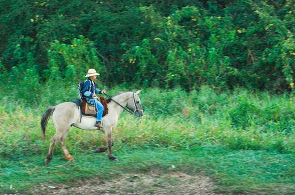 Stock Photo: 4163-18889 BRAZIL, MATO GROSSO, PANTANAL, REFUGIO ECOLOGICO CAIMAN, TEENAGE BOY GOING TO SCHOOL ON HORSEBACK
