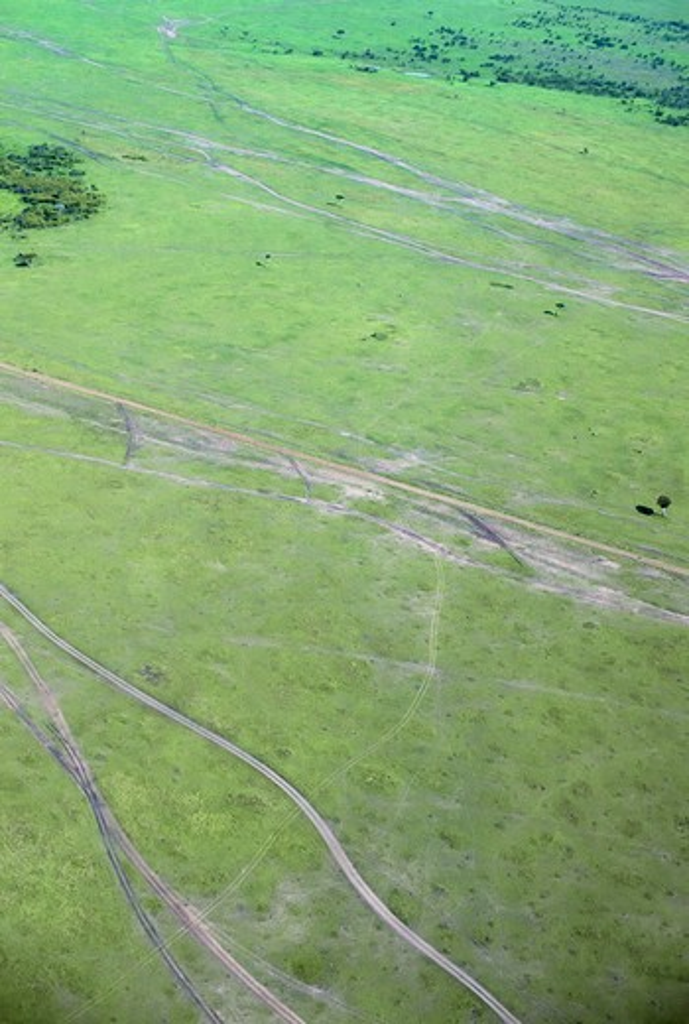 Kenya, Masai Mara, Aerial View Of Plain With Vehicle Tracks : Stock Photo