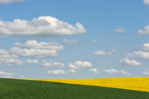 Usa, Idaho State, Palouse Country Near Moscow, Canola And Wheat Fields With Clouds : Stock Photo