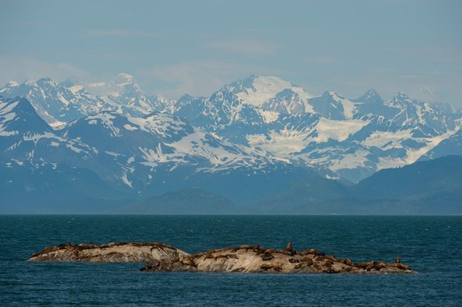 Stock Photo: 4163-21214 Steller sea lions (Eumetopias jubatus) resting on one of the Marble Islands with the Fairweather Mountain range in background, Glacier Bay National Park, Alaska, USA