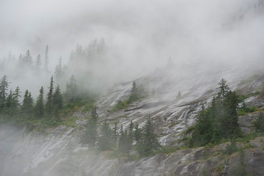 Stock Photo: 4163-21353 Fog rising out of forest after rain at Fords Terror, Endicott Arm, Tongass National Forest, Alaska, USA