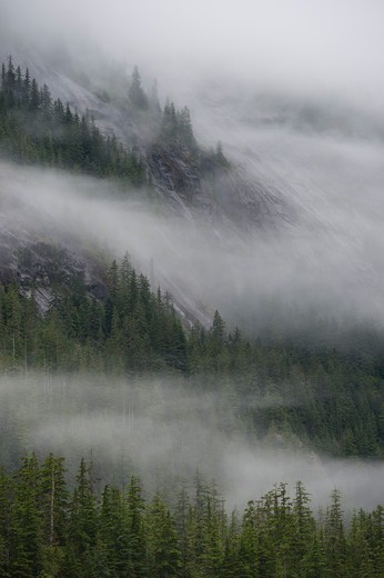 Fog rising out of forest after rain at Fords Terror, Endicott Arm, Tongass National Forest, Alaska, USA : Stock Photo
