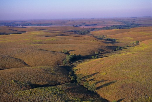 Stock Photo: 4163-2960 USA, KANSAS, FLINT HILLS, NEAR COTTONWOOD FALLS, AERIAL VIEW OF TALLGRASS PRAIRIE, CATTLE