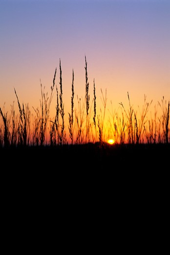 USA, KANSAS, NEAR STRONG CITY, TALLGRASS PRAIRIE, SUNSET : Stock Photo