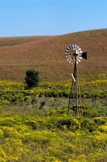 Stock Photo: 4163-3021 USA, KANSAS, FLINT HILLS, NEAR STRONG CITY, TALLGRASS PRAIRIE, HIGHWAY 150, BROOMWEED, WINDMILL