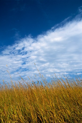 Stock Photo: 4163-3052 USA, KANSAS, MANHATTAN, KONZA PRAIRIE RESEARCH NATURAL AREA, GRASSES