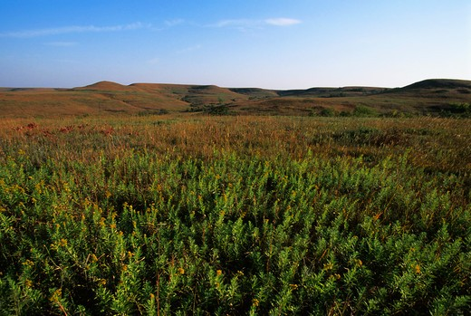 USA, KANSAS, MANHATTAN, KONZA PRAIRIE RESEARCH NATURAL AREA, LANDSCAPE : Stock Photo