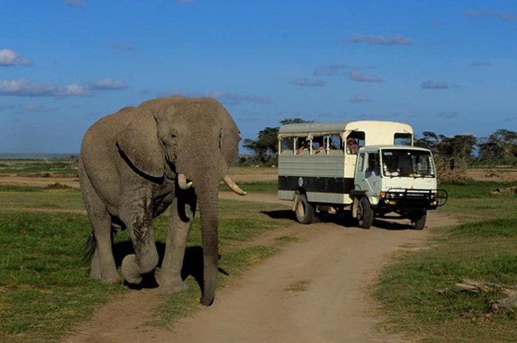 KENYA,AMBOSELI NAT'L PARK TOURISTS WATCHING ELEPHANT : Stock Photo