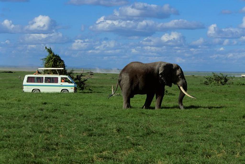 Stock Photo: 4163-6358 KENYA, AMBOSELI NAT'L PARK TOURISTS WATCHING ELEPHANT