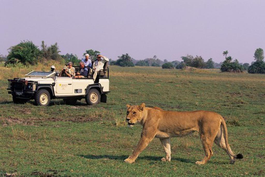 Stock Photo: 4163-6836 BOTSWANA, OKAVANGO DELTA, MOMBO ISLAND, LIONESS WITH TOURISTS IN BACKGROUND