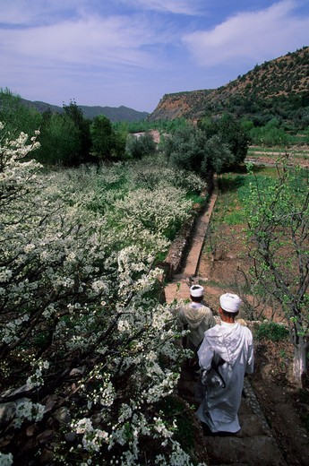 Stock Photo: 4163-7832 MOROCCO, NEAR MARRAKECH, ATLAS MOUNTAINS, OURIKA VALLEY, BERBER PEOPLE IN ALMOND ORCHARD