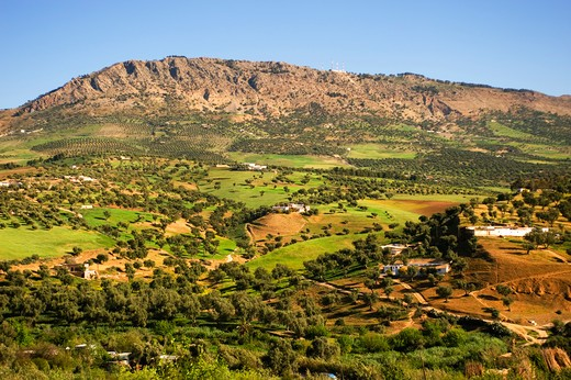 Stock Photo: 4163-8617 MOROCCO, FEZ, VIEW OF FIELDS WITH OLIVE TREES