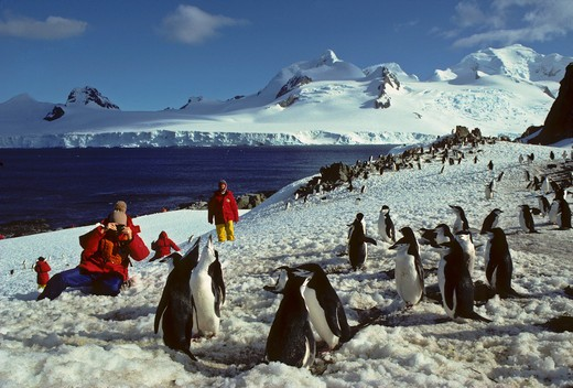 ANTARCTICA, HALFMOON ISL., TOURISTS WATCHING CHINSTRAP PENGUIN COLONY,(MODEL RELEASES #38 & #41) : Stock Photo