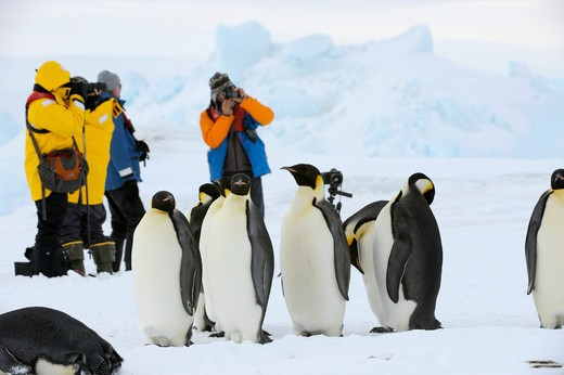 Stock Photo: 4163-9414 ANTARCTICA, WEDDELL SEA, SNOW HILL ISLAND, TOURISTS AT EMPEROR PENGUIN COLONY Aptenodytes forsteri