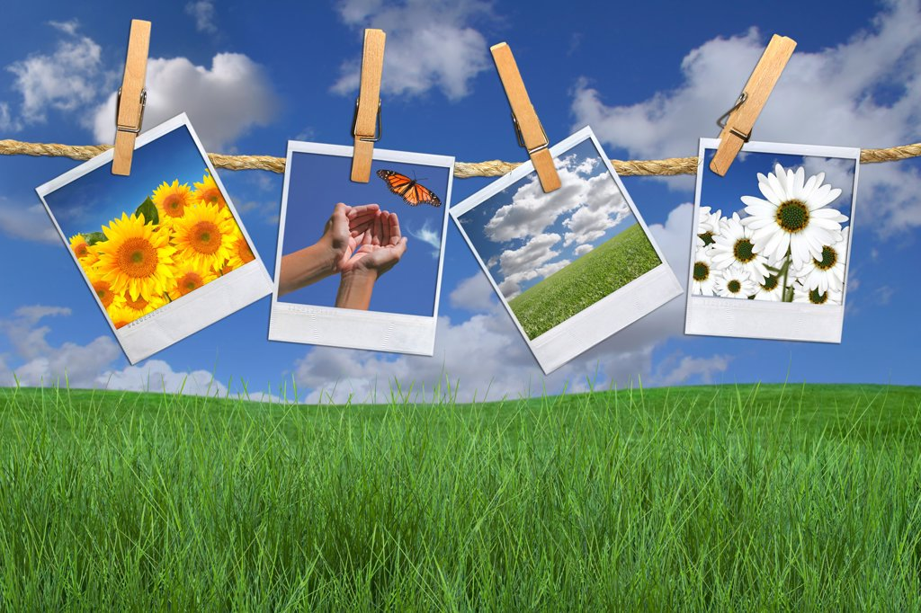 Green Grass and Blue Sky With Hanging Photos of Flowers : Stock Photo