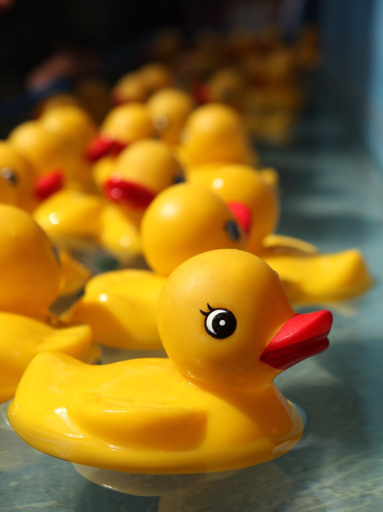 Rubber Duckies Floating in a Carnival Game Outdoors : Stock Photo