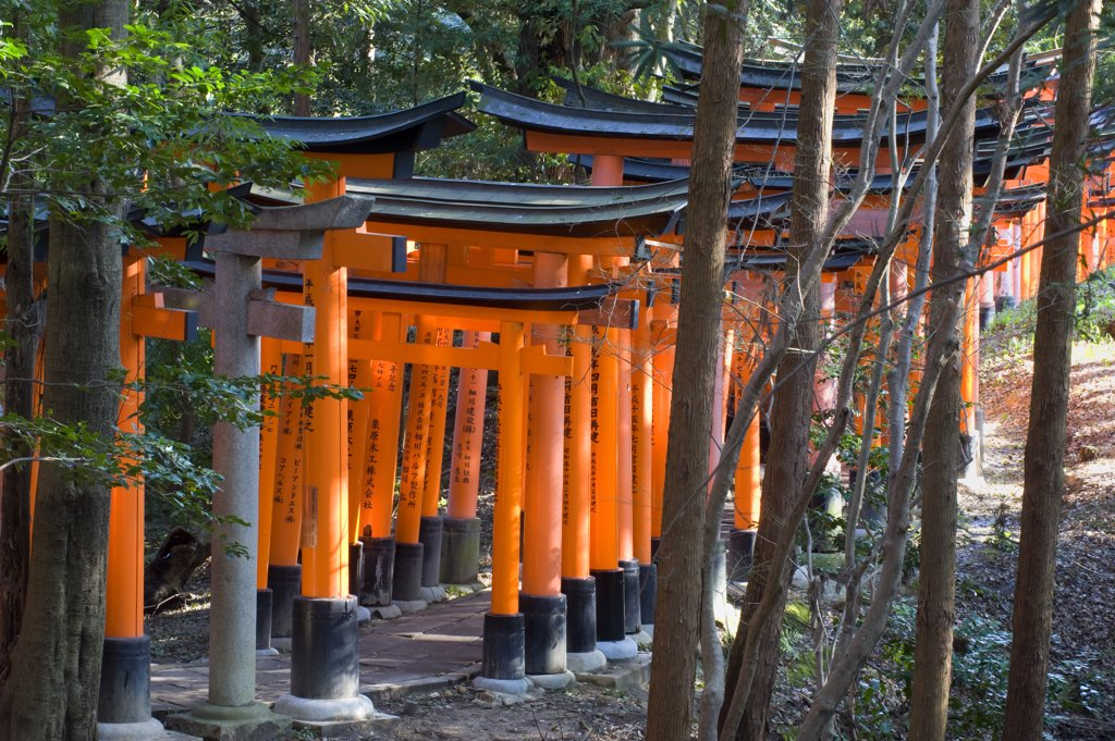 Stock Photo: 4168-10863 Japan, Kyoto, Fushimi Inari Shrine (Shinto Shrine), Torii Gates (Offerings) In Forest