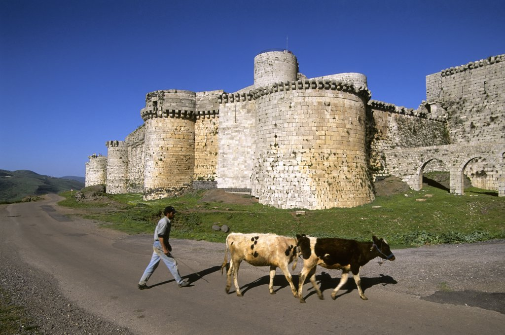 Stock Photo: 4168-11297 Syria, Near Homs, Central Syria, Crac Des Chevaliers, Castle Of The Knights, Syrian Farmer,Cattle