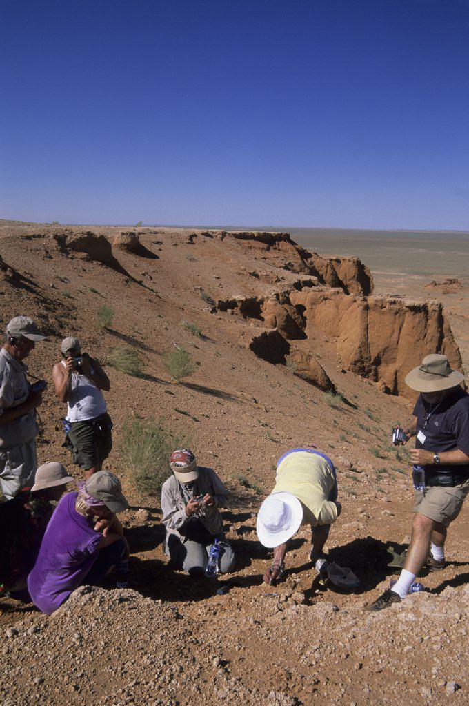 Mongolia,  Near Dalanzadgad, Gobi Desert, Bayanzag, Flaming Cliffs, Dr. Badamgarav Excavating Dinosaur Egg : Stock Photo