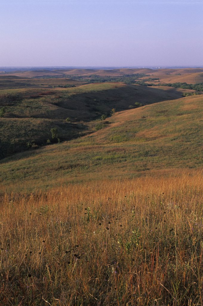 Stock Photo: 4168-13028 USA, Kansas, Manhattan, Konza Prairie Research Natural Area, Landscape With Tall Grass Prairie