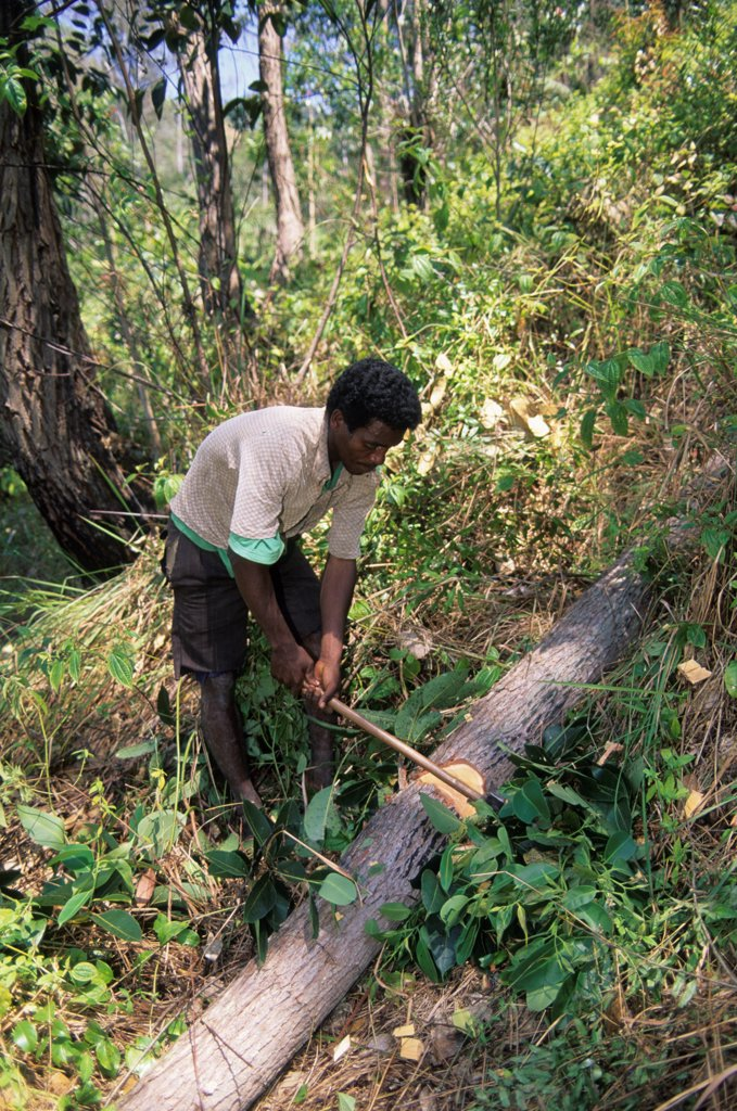 Stock Photo: 4168-14908 Madagascar, Near Moramanga, Mandraka, Man Cutting Tree For Charcoal Production