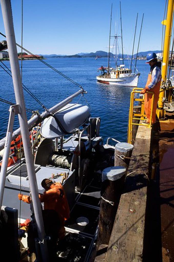 Stock Photo: 4168-3346 Usa, Alaska, Inside Passage, Baranof Island, Sitka, Fish Factory, Halibut Catch Being Unloaded