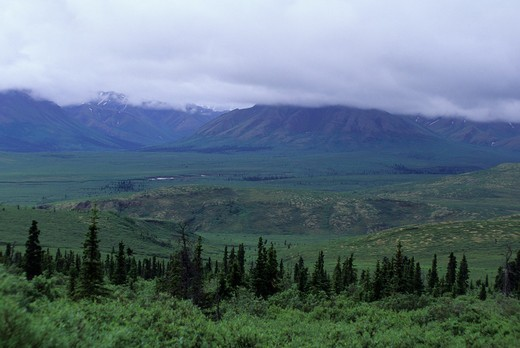 Usa, Alaska, Denali National Park, Taiga : Stock Photo