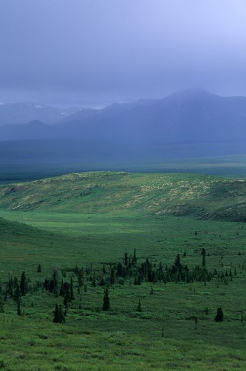 Usa, Alaska, Denali National Park, Rain : Stock Photo